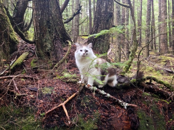 An Unexpected Hiking Partner